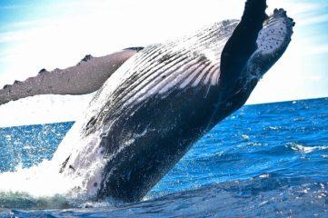 クジラは魚なのか